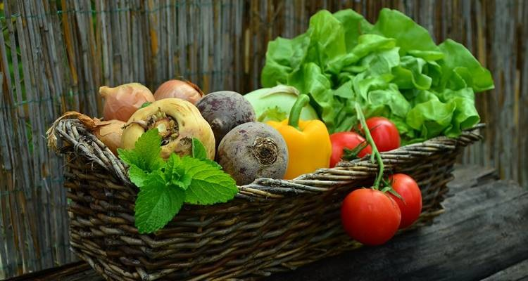 Frutos da época